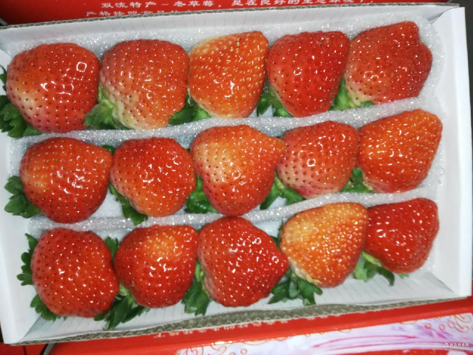 代理批发供应超市水果店巧克力芳香草莓产地直销 水果双流冬草莓