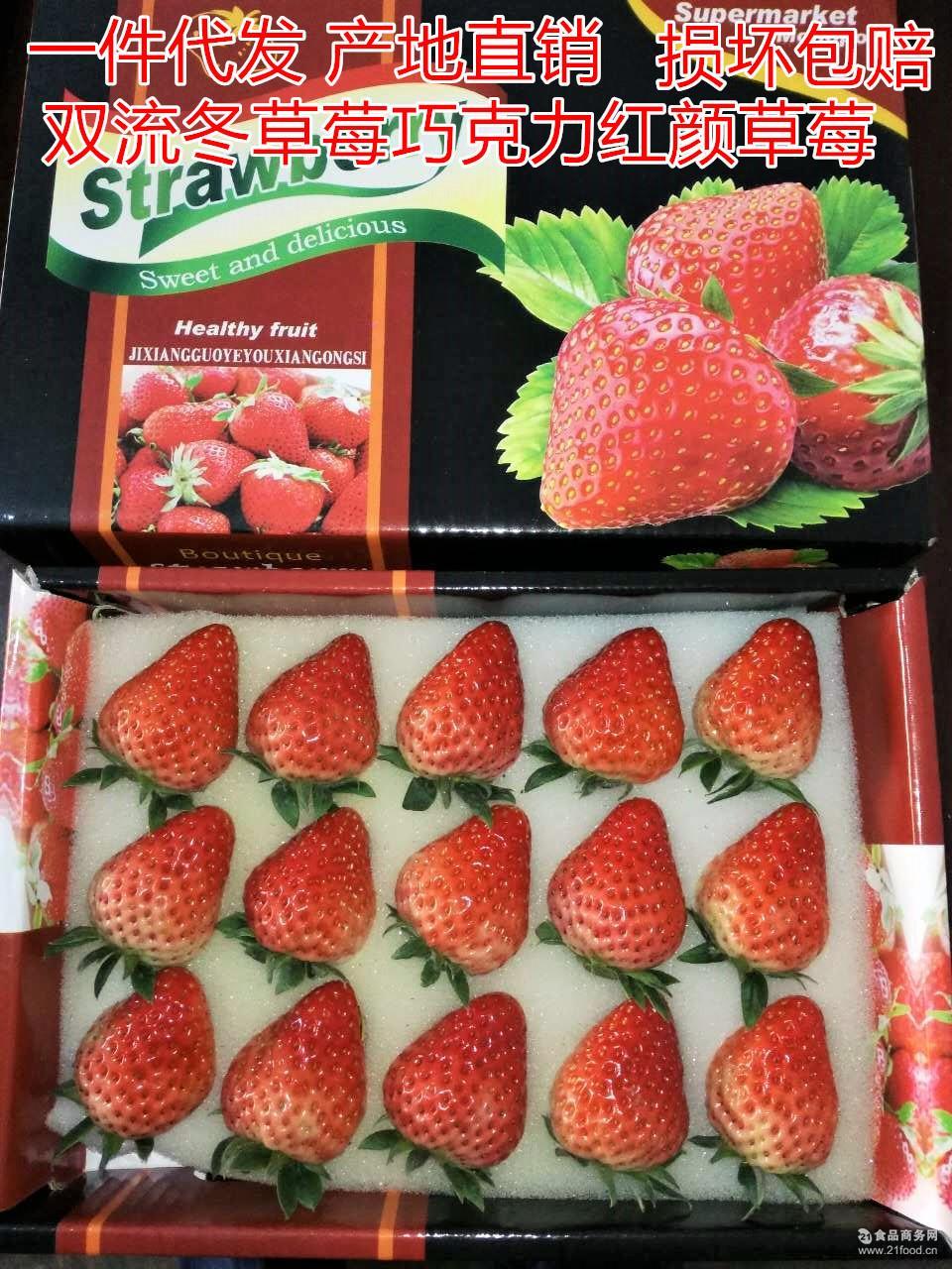 水果双流冬草莓 代理批发供应超市水果店巧克力芳香草莓产地直销