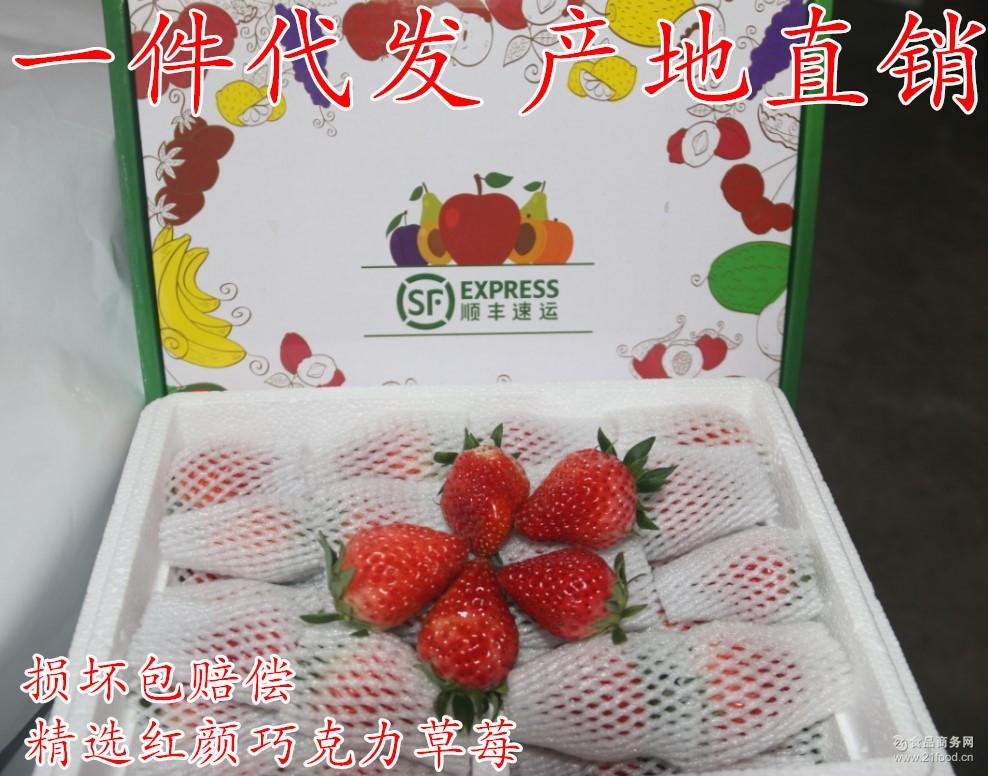 红颜芳香奶油零售批发精品大量供应批发产地直销 水果双流冬草莓