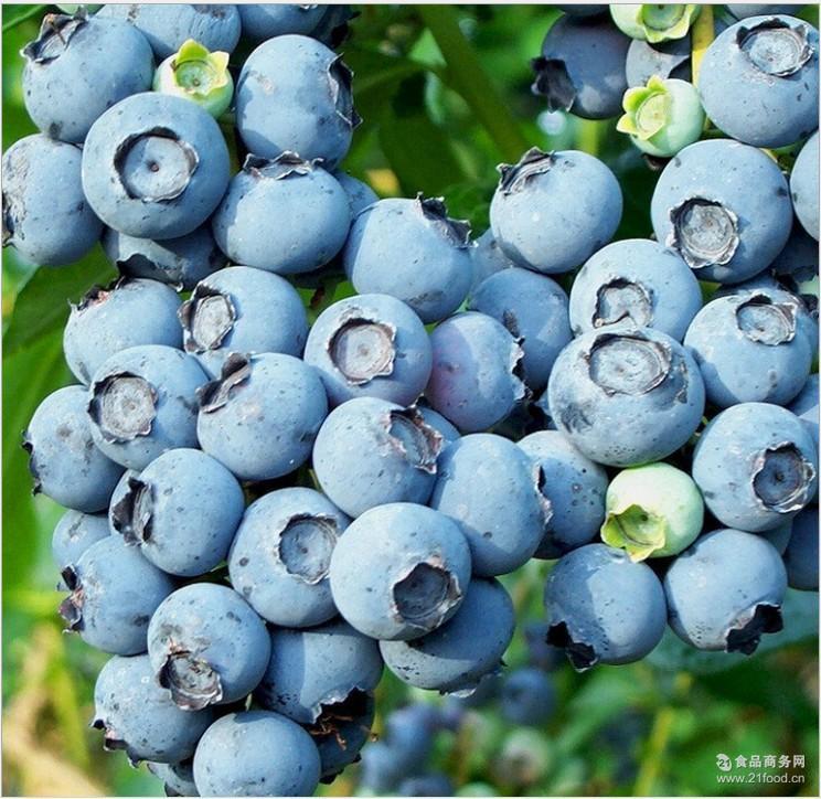 无公害水果蓝莓  出售蓝莓新鲜水果 基地现摘现发莱克西蓝莓果