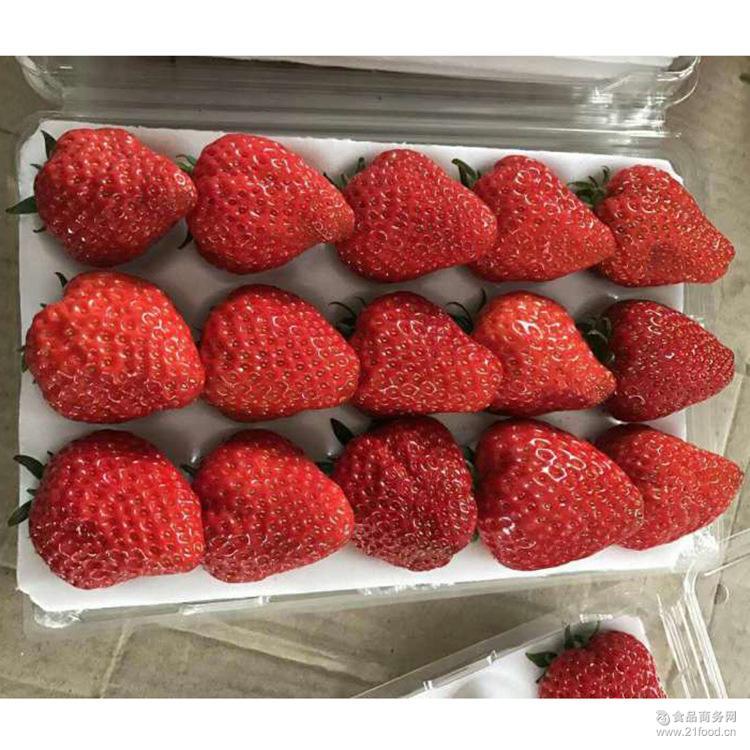 鲜嫩水润 预售草莓 新鲜采摘 香甜多汁 新鲜草莓 产地直供