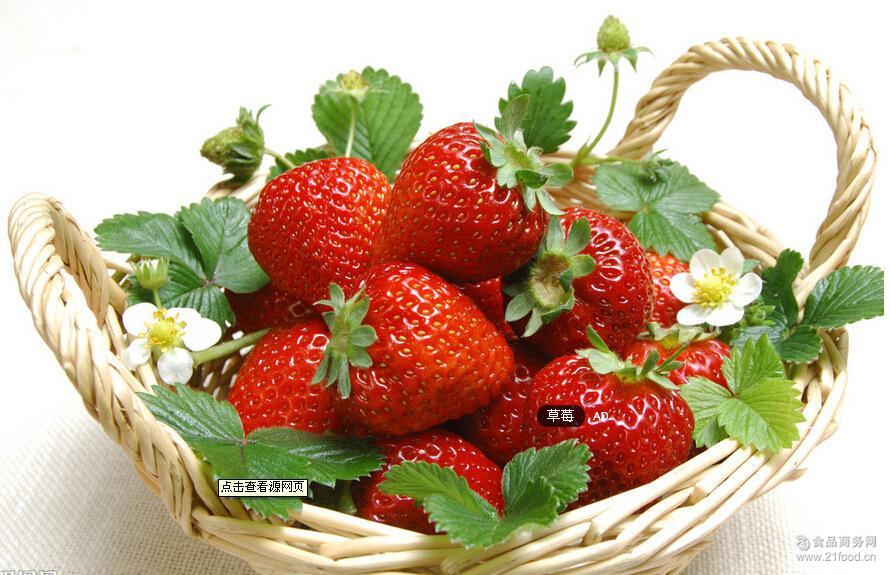 多种品种草莓经销 销售无公害草莓 健康草莓出售 有机草莓