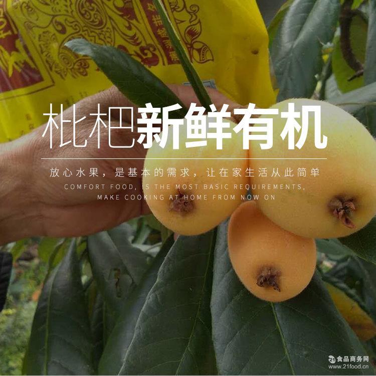 量多价优 产地直销 云霄富硒枇杷 新鲜绿色有机水果