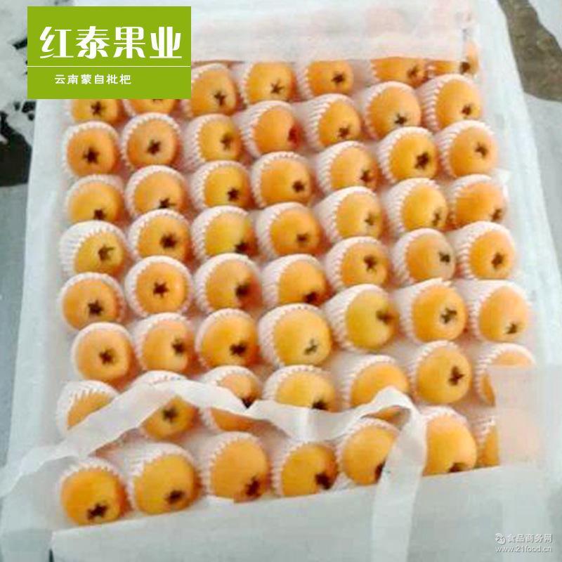云南特产蒙自枇杷 新鲜水果甜枇杷 招收代理商 预售3斤装枇杷