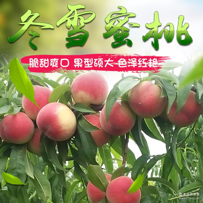 山东蜜桃 雪桃3斤快递包邮桃子 【雪桃预售】-果园直供冬雪蜜桃