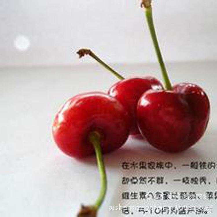 山东烟台大樱桃批发团购产地直销新鲜车厘子大樱桃价格特价
