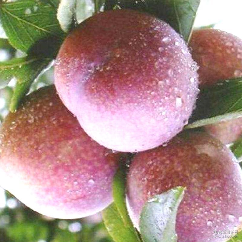 四川古蔺县水果脆红李 新鲜水果 清脆脆红 水果味道可口 脱骨李