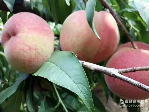 果园直销春雪桃春蜜桃水蜜桃无公害新鲜水果5斤装10斤装批发