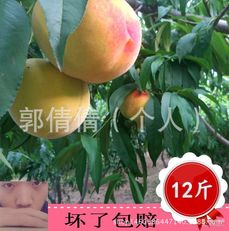 安徽砀山正宗黄桃新鲜水果糖水桃子批发农家特产黄桃罐头包邮现发