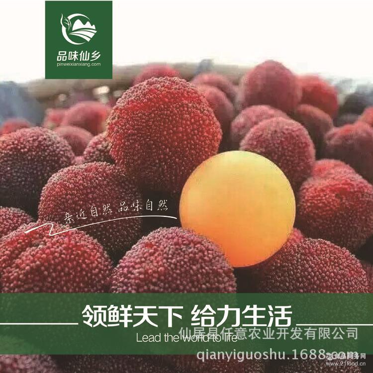 杨梅新鲜水果产地直销仙居杨梅高山荸荠东魁杨梅一件代发