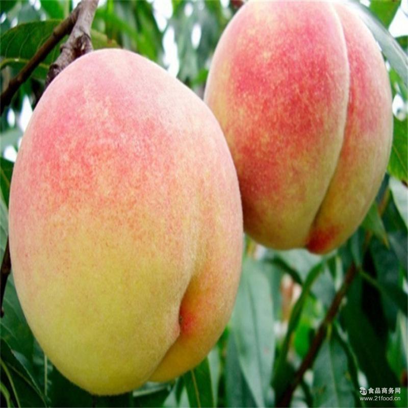 绿色无公害水果 新鲜采摘肥城冬雪蜜桃 正宗农家基地 保证新鲜