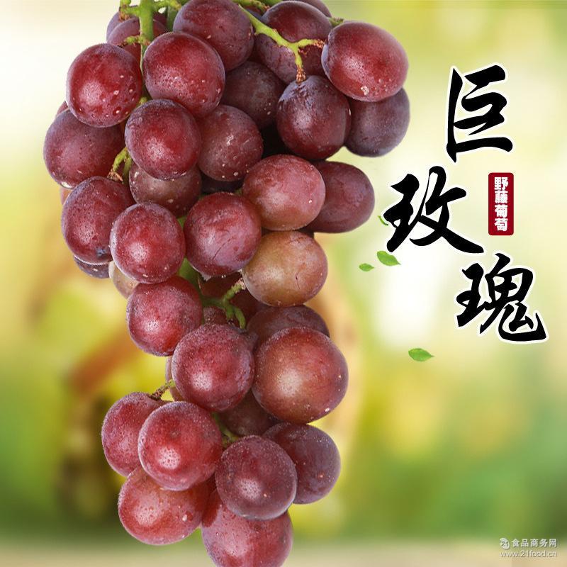 上虞巨玫瑰新鲜葡萄4斤玫瑰香时令水果现摘现发 野藤葡萄