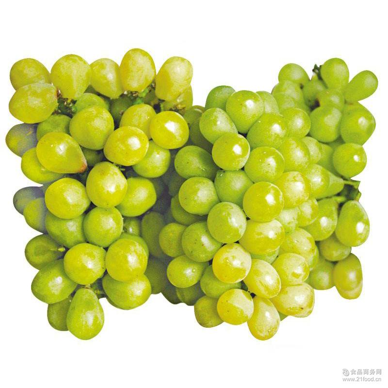 果园直供现摘现发醉金香葡萄甘甜多汁5斤装 预售新鲜水果 批发