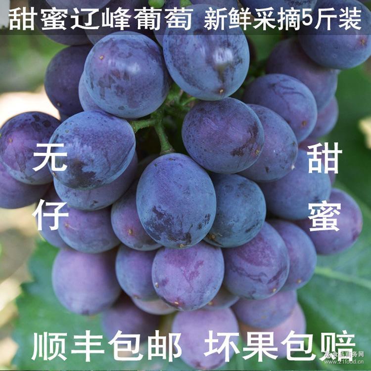 现摘无仔辽峰葡萄孕妇无核绿色水果紫葡萄新鲜甜蜜5斤装顺丰包邮