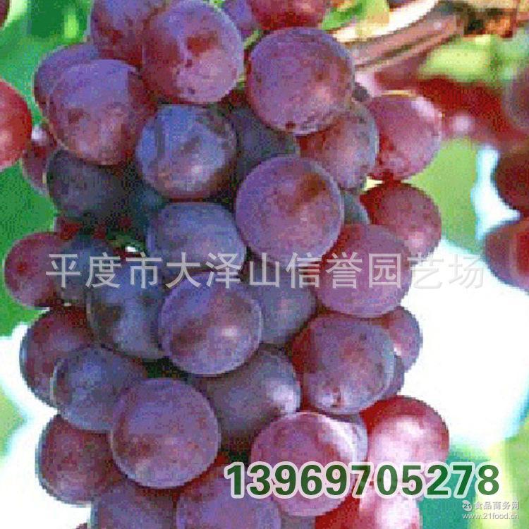 供应香甜可口的大泽山玫瑰香葡萄