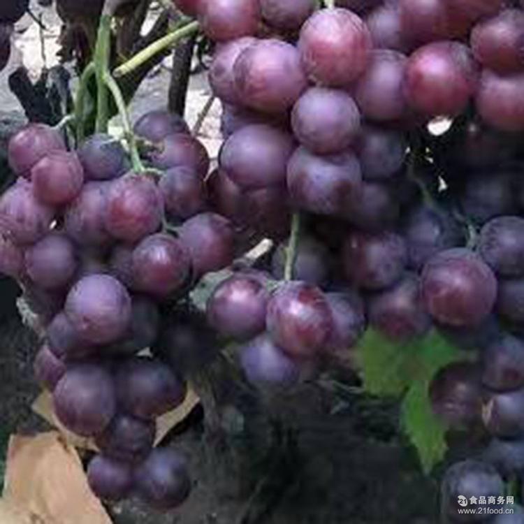 无籽红提无核葡萄新鲜葡萄无子提子水果 新鲜营养美味健康