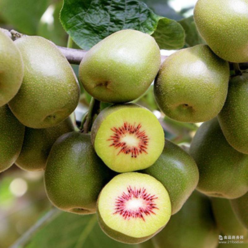 预售中 果园直供新鲜水果四川特产红心猕猴桃奇异果现摘现发水果