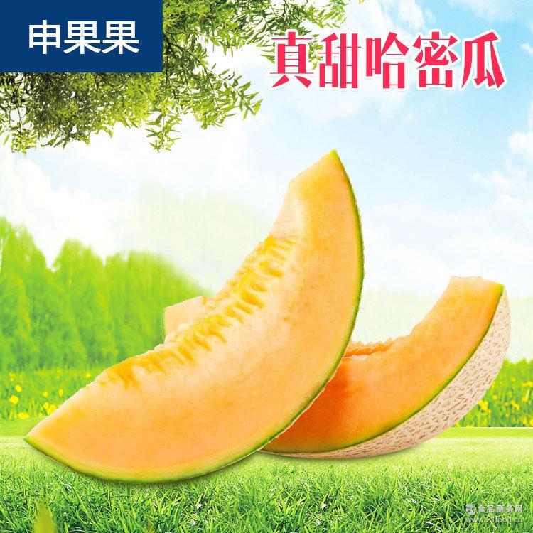 厂家直销 2017鲜果哈密瓜 新鲜应季水果新疆哈密瓜批发
