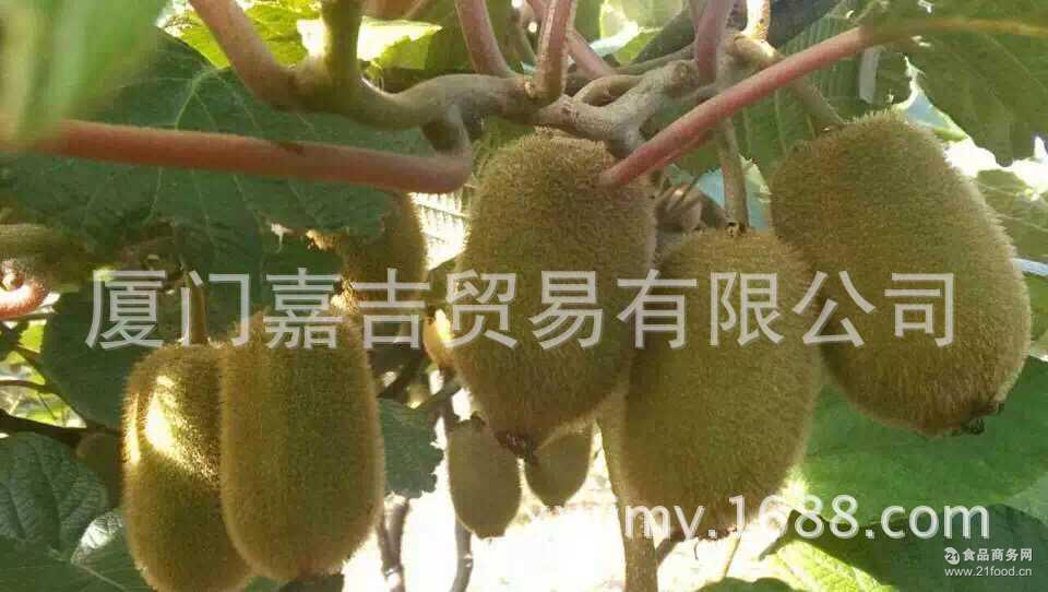 美味好吃 美味绿肉奇异果 新鲜水果 【嘉吉】野生猕猴桃 口感香甜