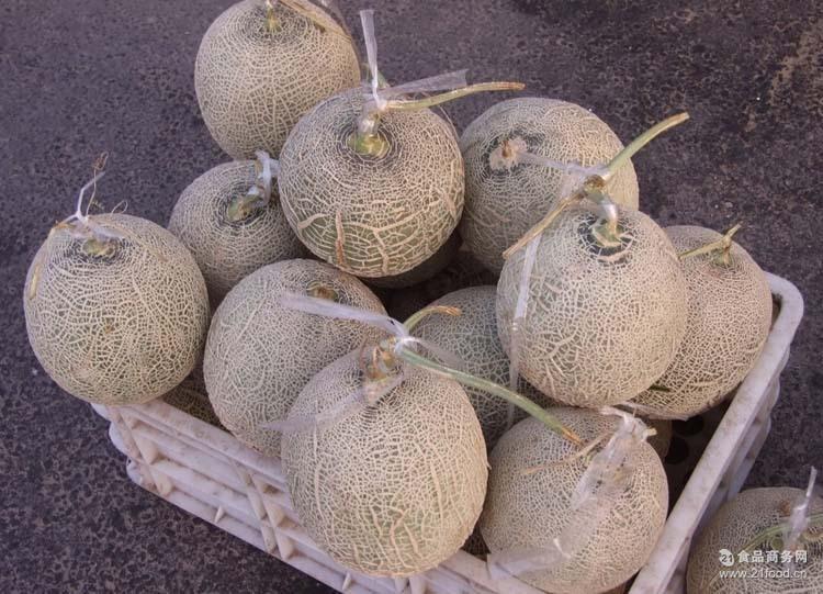 【爱鲜果】青岛网纹瓜 包邮 哈密瓜 绿瓤瓜 很甜 5斤1-2颗