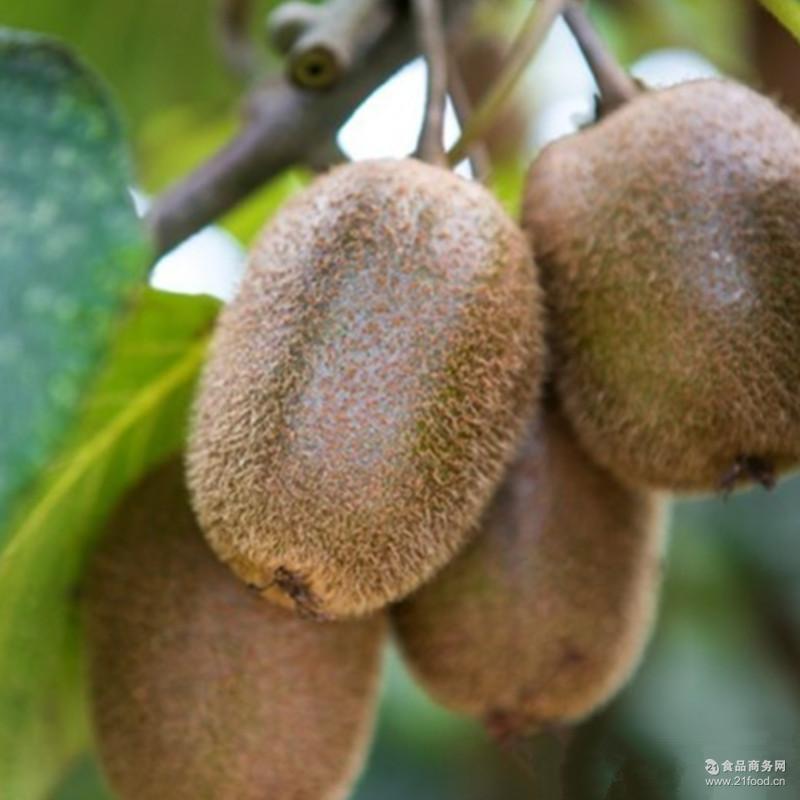 新鲜水果奇异果微信一件代发包邮 开始预售 江山徐香猕猴桃批发