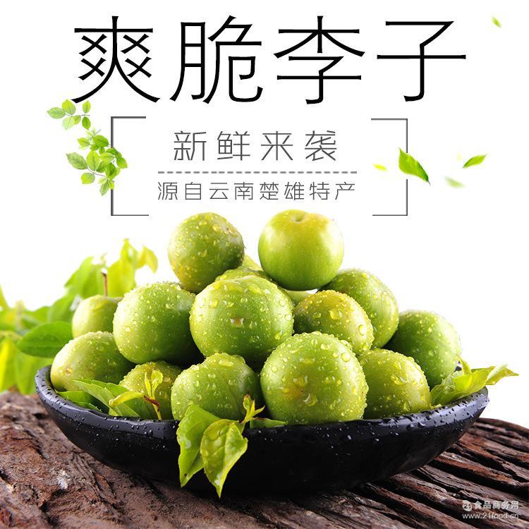 预售云南特产新鲜水果李子 农家特产酸爽脆李 清脆脱核小李子