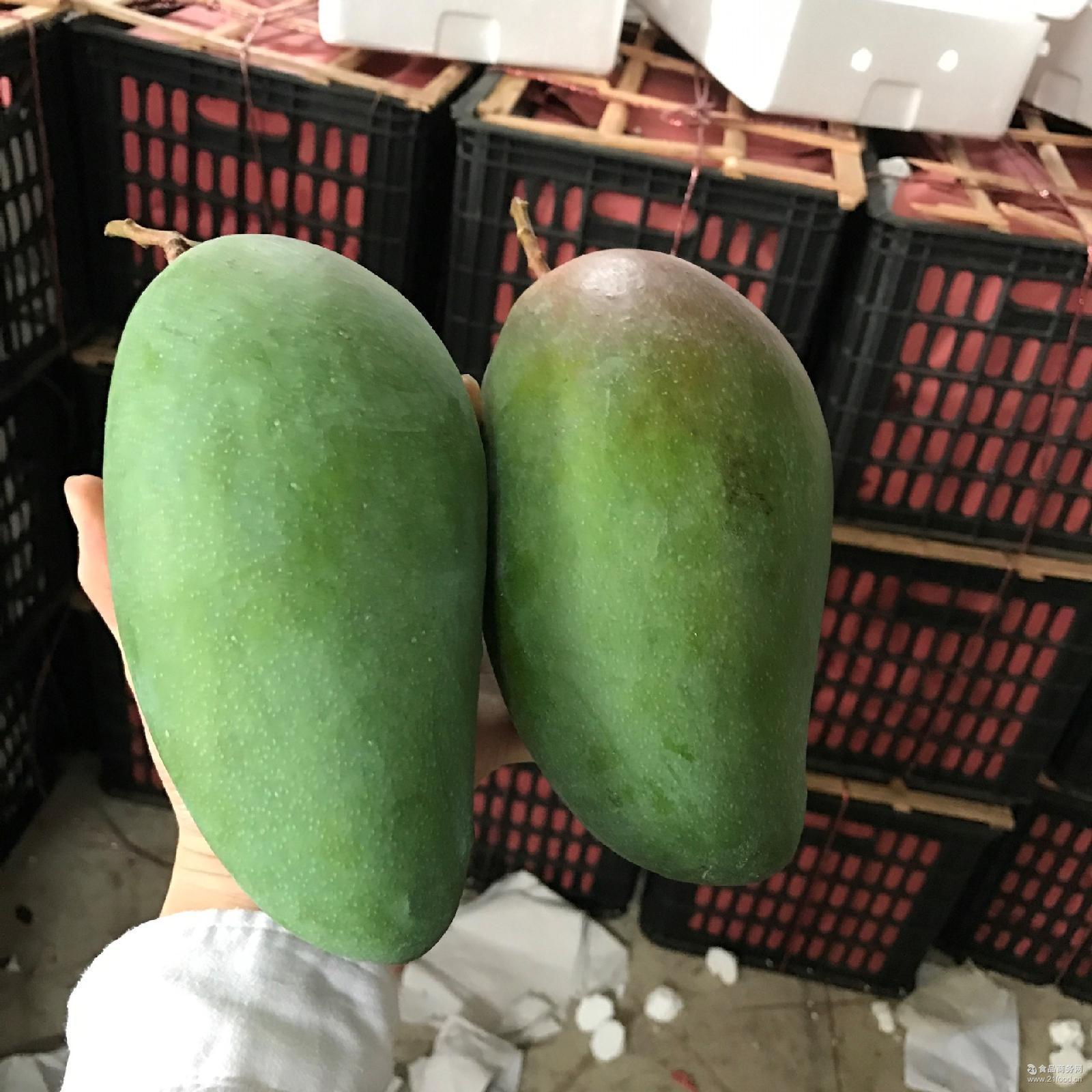 青皮金煌芒热带水果个头大肉厚核小香甜 芒果新鲜水果 海南大青芒