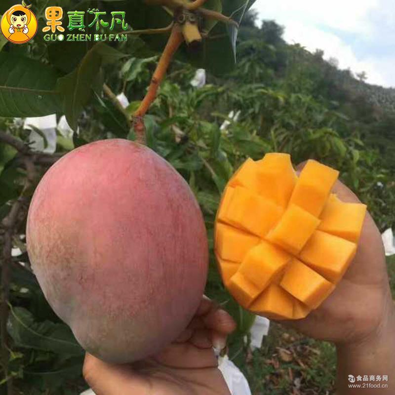 【果真不凡】攀枝花凯特新鲜水果5斤8斤盒装果园直销凯特芒果