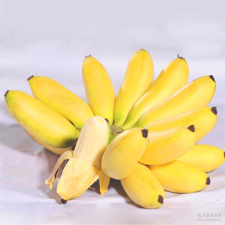 (停售)一件代发新鲜热带水果现摘粉蕉小米蕉香蕉广西蕉皇帝蕉包