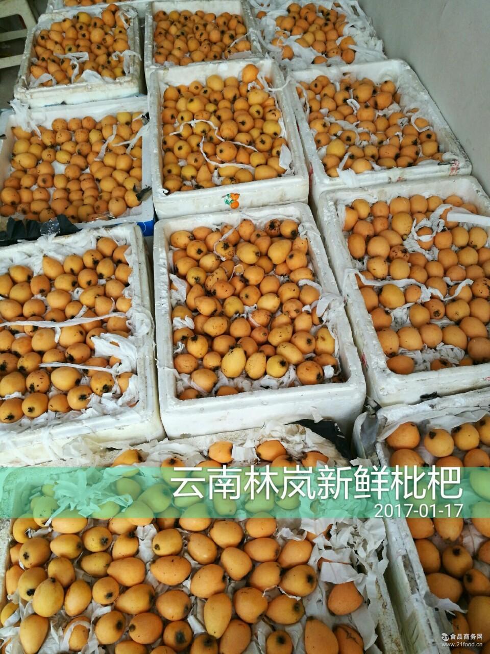 2017云南蒙自3月枇杷精品果*的长虹枇杷活动装10斤装低价批发