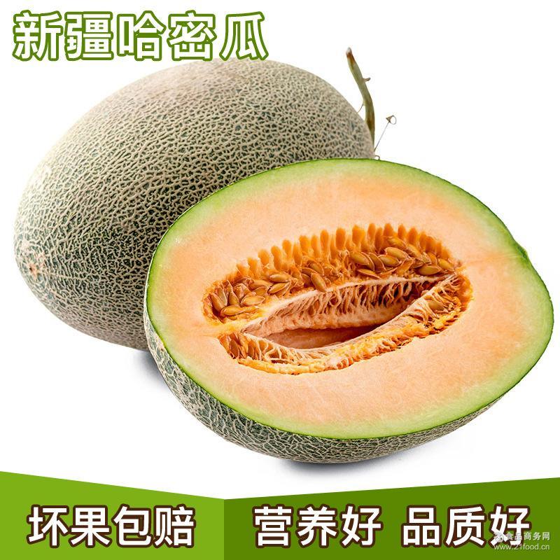 批发新疆哈密瓜 孕妇水果西周密哈蜜瓜 新鲜水果吐鲁番蜜甜瓜