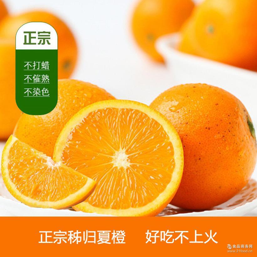 湖北秭归脐橙 5斤精品装 包邮 秭归夏橙