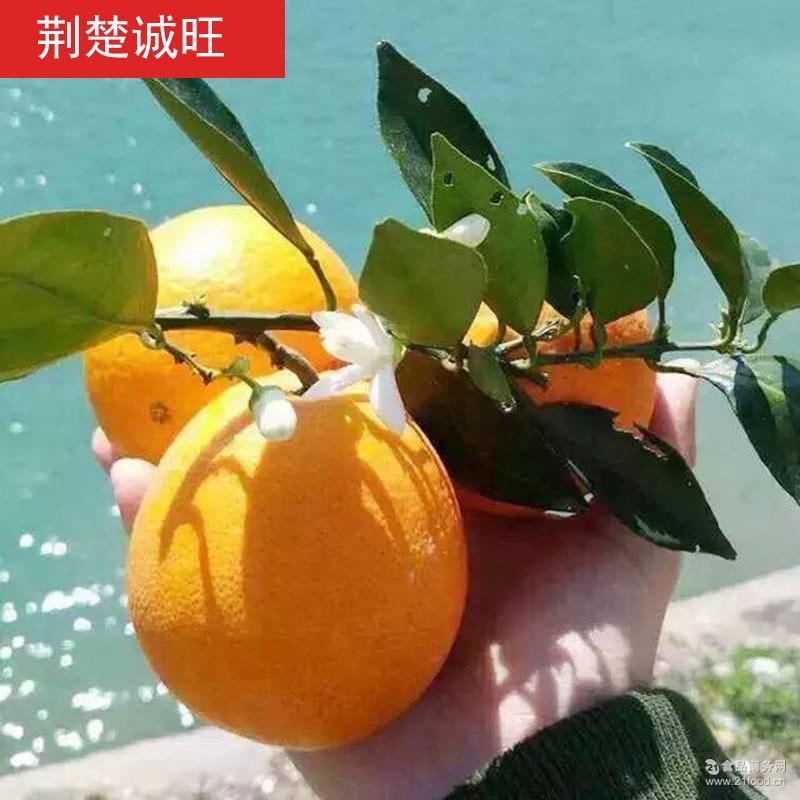 现摘现发秭归脐橙橙子伦晚脐橙春橙5斤装新鲜水果代理批发