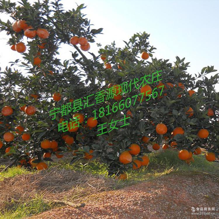 批量供应箱装水果火热现货 果园现摘无公害橙子 正宗赣南脐橙批发