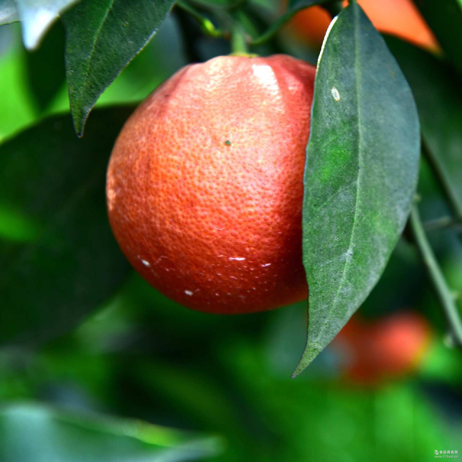 秭归血橙塔罗科顺丰9斤包邮天然新鲜水果果园