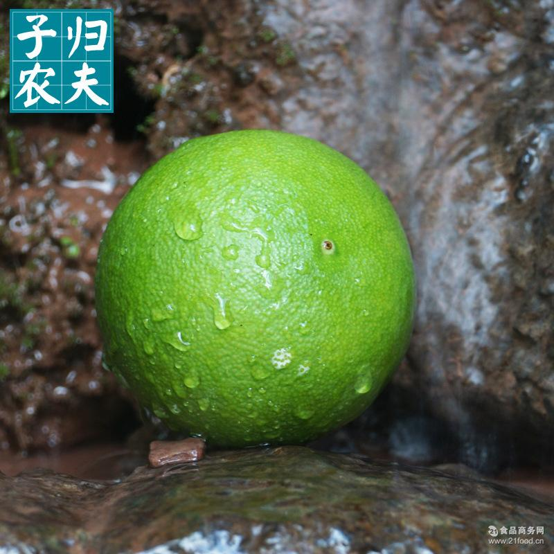 秭归脐橙 爆浆秋橙 九月红橙子 预售2017年10月三峡特产 9斤包邮