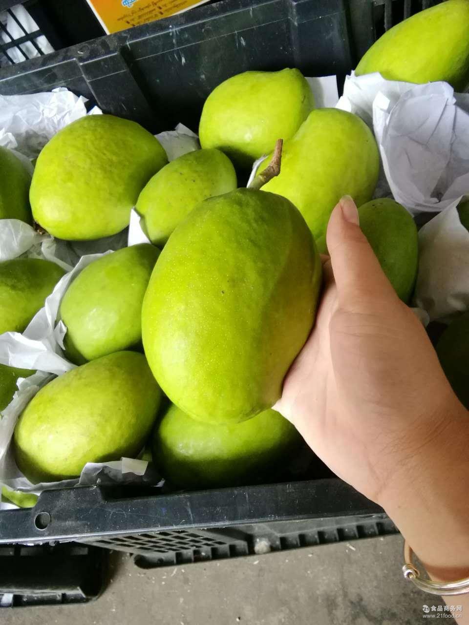 芒果热带水果 产地直供 微商一件代发 肉厚 多汁 缅甸特产圣德龙