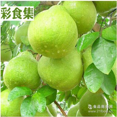 一件代发 供应阳朔沙田柚单果2斤以上世界四大名柚