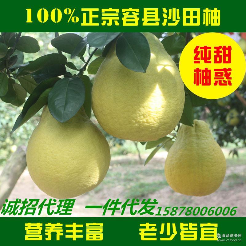 广西容县红心蜜柚 沙田柚水果2个礼品精装一件代发 新鲜柚子