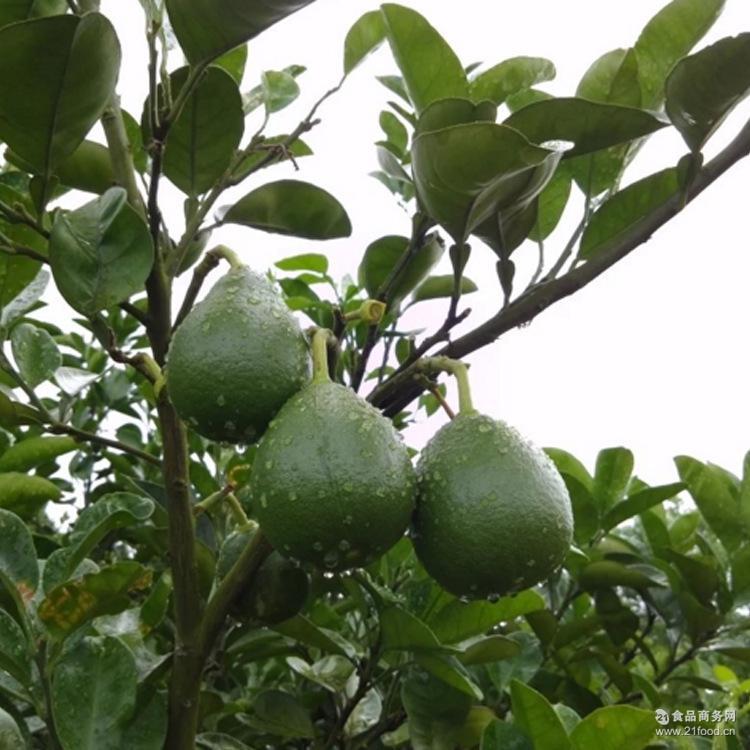 产地直销 正宗井岗蜜柚 风味甜爽适口果肉脆嫩 绿色纯天然蜜柚