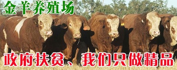 哪里卖牛犊价格便宜