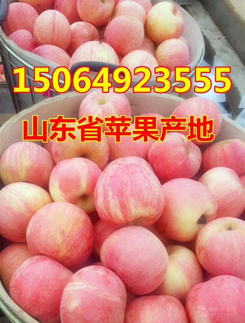 烟台红富士苹果价格山东冷库苹果价格