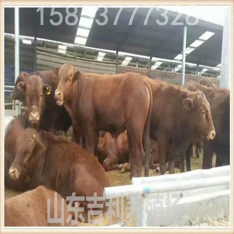 江苏哪里有小牛出售