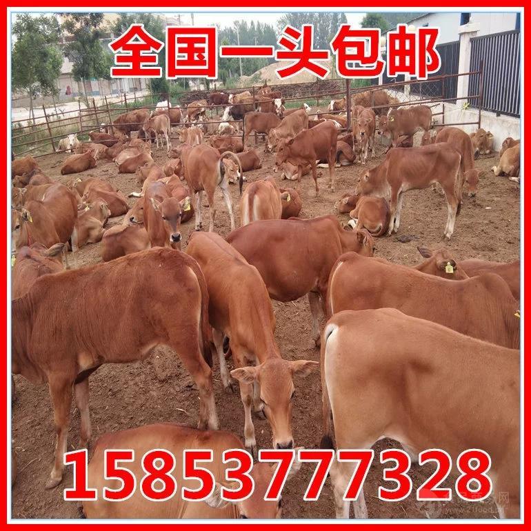 江苏常州养牛场