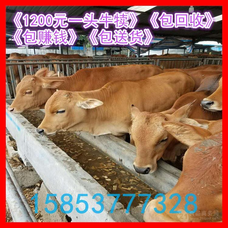 肉牛的市场价格