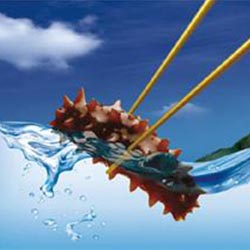 老人吃大海参好处野生海参价格多少钱个