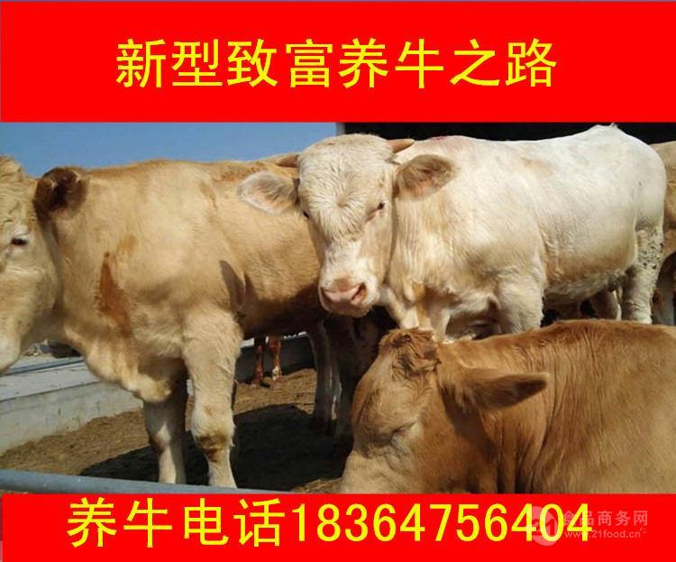 青海出售的利木赞牛多钱生态养牛