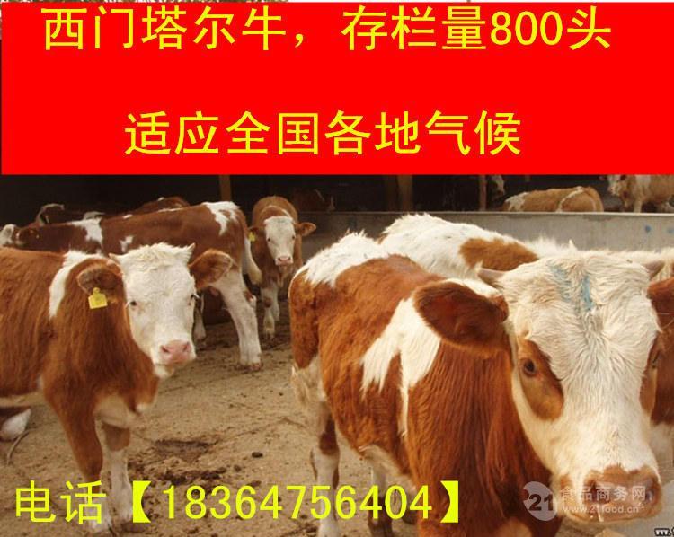 青海出售的利木赞牛价格生态养牛