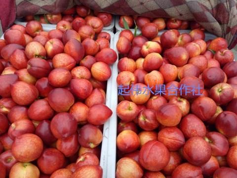 安徽省大棚油桃价格 今年安徽油桃批发价格