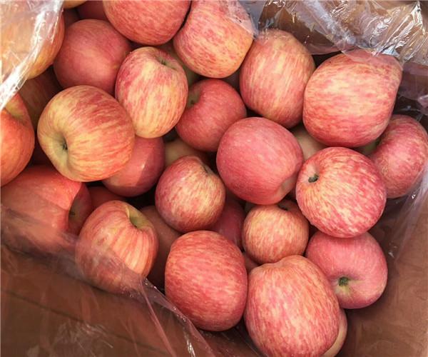 陕西洛川冷库红富士苹果价格